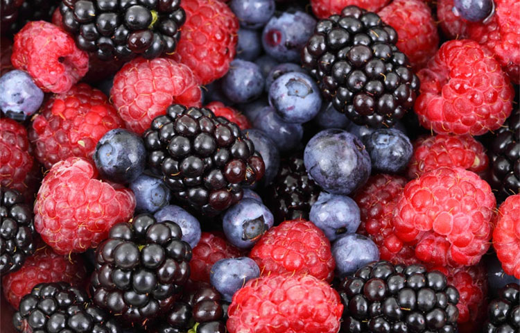 Eating Berries Delays Memory Decline